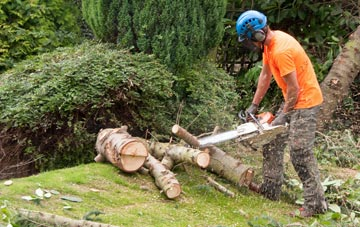 additional services offered by Old Boston tree surgeons