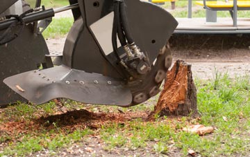 professional Old Boston stump grinding services