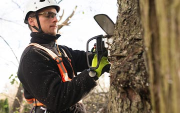 Old Boston tree surgery costs