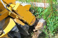 Old Boston tree stump grinding services