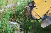 free Old Boston tree stump grinding quotes