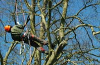 Old Boston tree surgery services